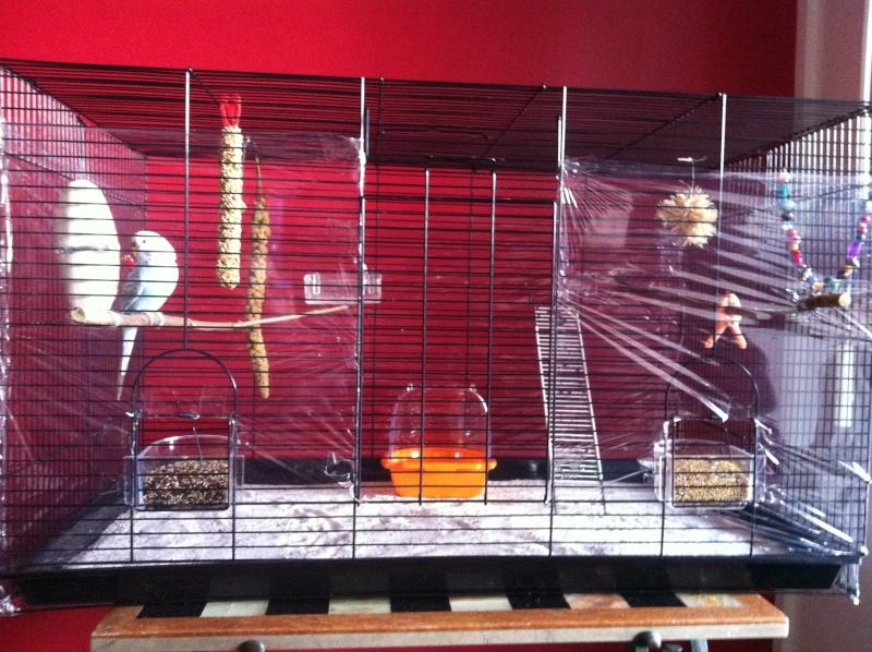 Nouvelle cage de Poukie: un peu d'aide pour l'aménagement? Iphon190