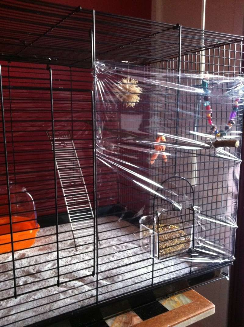 Nouvelle cage de Poukie: un peu d'aide pour l'aménagement? Iphon192