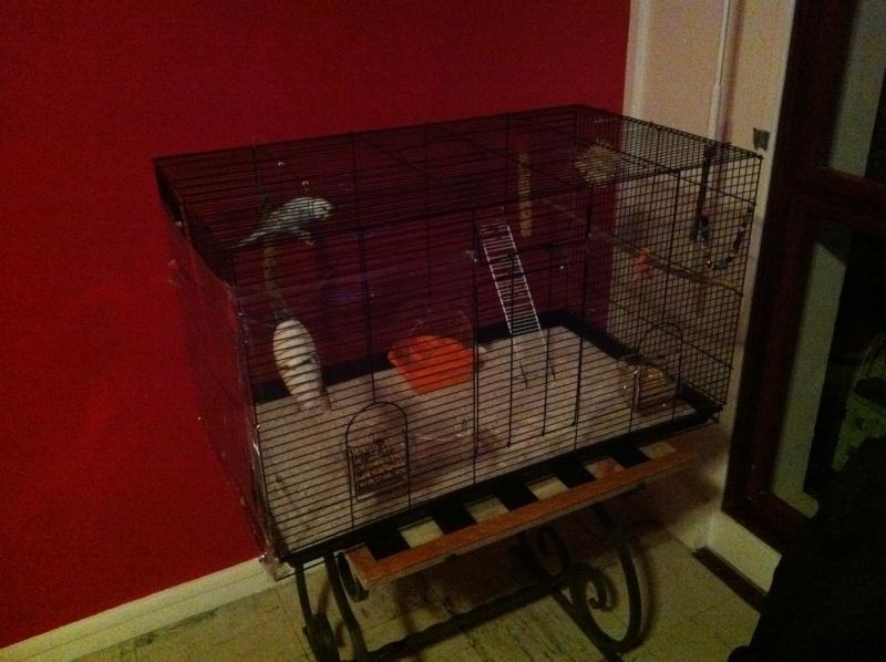 Nouvelle cage de Poukie: un peu d'aide pour l'aménagement? Iphon193