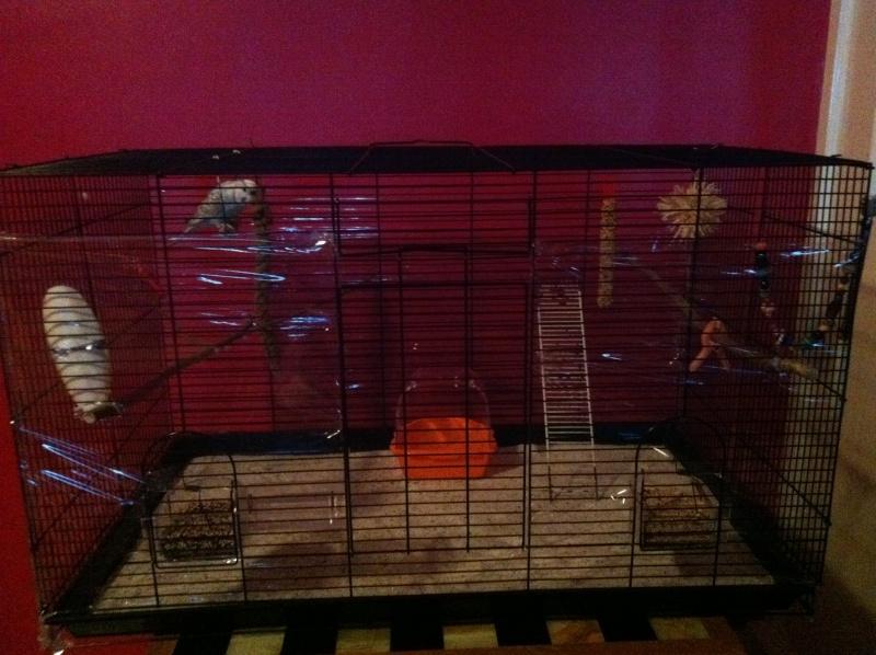 Nouvelle cage de Poukie: un peu d'aide pour l'aménagement? Iphon194
