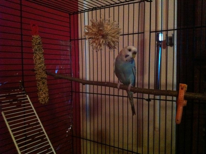 Nouvelle cage de Poukie: un peu d'aide pour l'aménagement? Iphon202