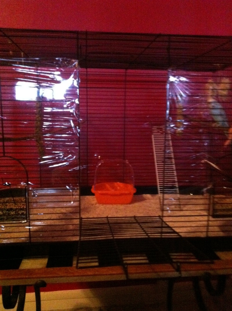 Nouvelle cage de Poukie: un peu d'aide pour l'aménagement? Iphon203
