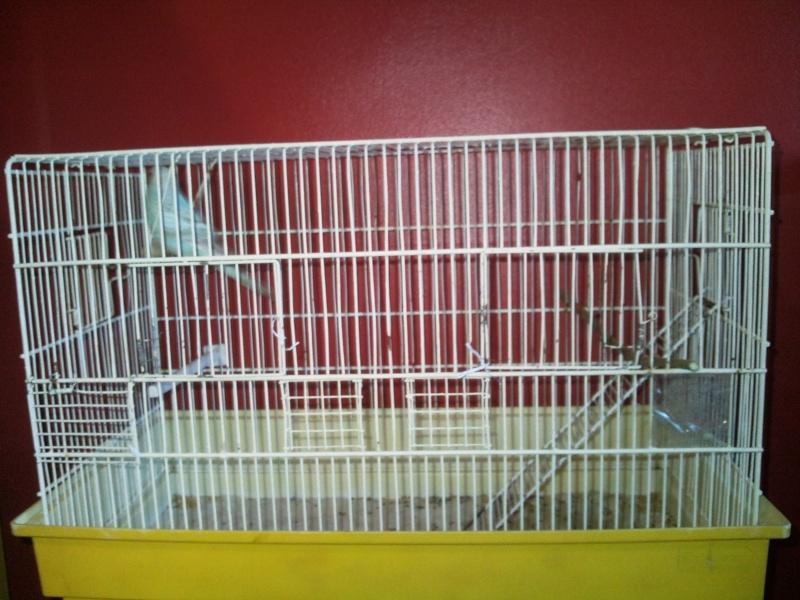 Nouvelle cage de Poukie: un peu d'aide pour l'aménagement? Photo210