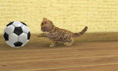 Nintendogs & Cats 07011