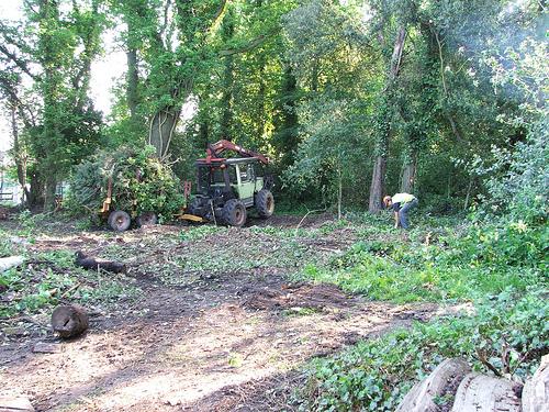 unimog mb-trac wf-trac pour utilisation forestière dans le monde - Page 6 57528510