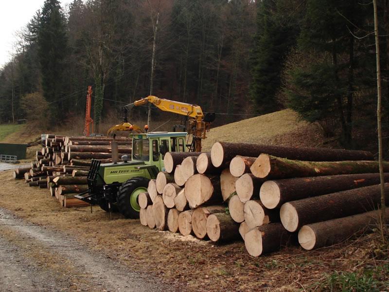 forestiers de roger : troisième partie - Page 2 Dsc00911