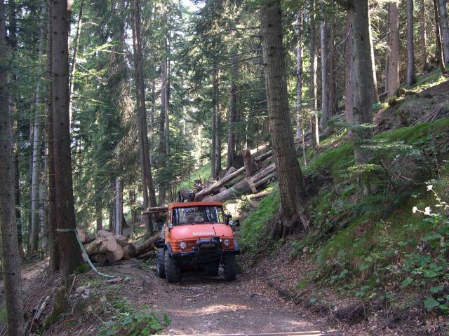 unimog mb-trac wf-trac pour utilisation forestière dans le monde - Page 19 Holzsc10
