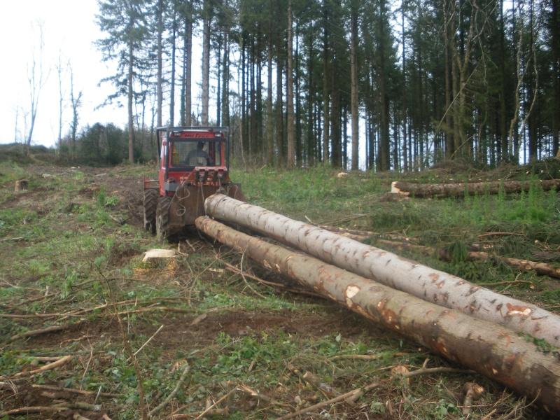 forestiers de roger : deuxième partie - Page 38 Imgp3744