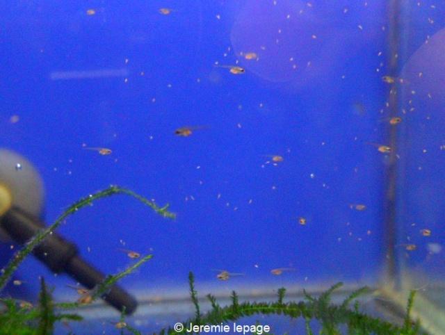 Repro HM du 23 / Mai / 2012 Sam_2911