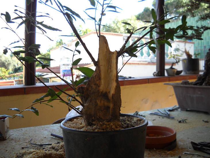 Talee legnose invernali (Giornata da eskimo e doposci) Dscn1520