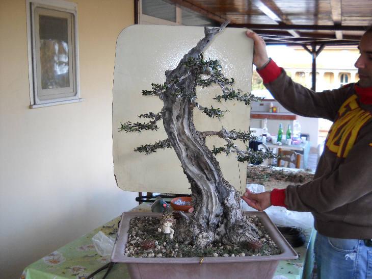 Talee legnose invernali (Giornata da eskimo e doposci) Dscn1524