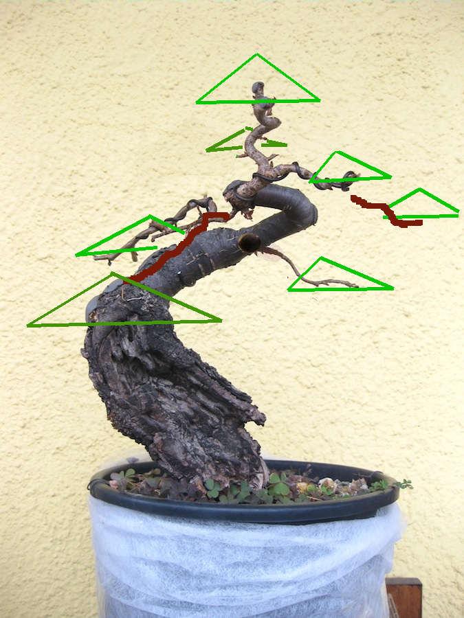 "Prunus mahaleb ""Stelo di giada"". - Pagina 4 Img_4010"