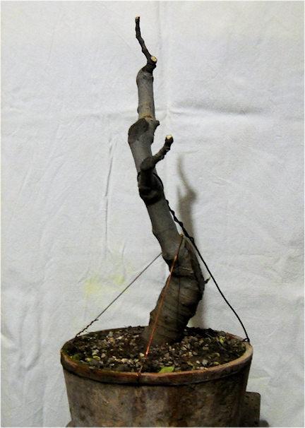 Da Macro a Micro - Ficus carica a go-go Immagi32