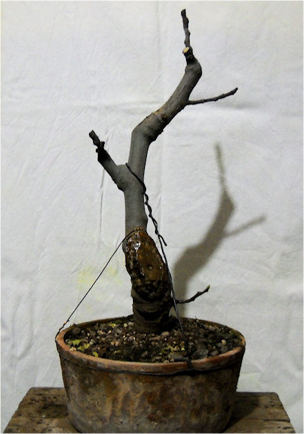 Da Macro a Micro - Ficus carica a go-go Immagi33