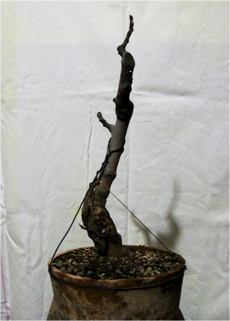 Da Macro a Micro - Ficus carica a go-go Immagi34