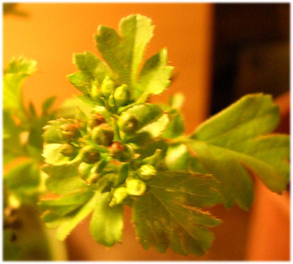 la bellezza della primavera ... Immagi37