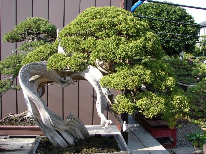 Per riflettere un po - Una Kimurata Kimura10