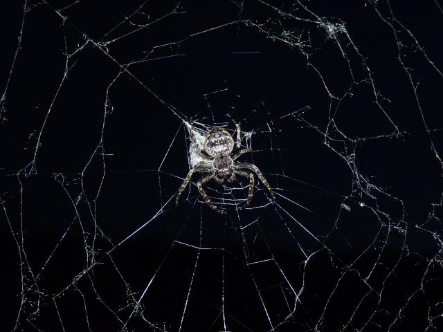 Araignée à identifier P1010610