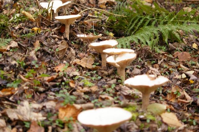 Farandole de champignons et de mousses 1_dec_10