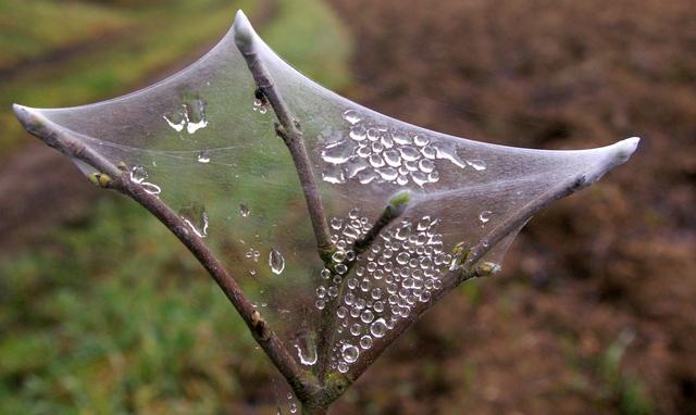 Gouttes d'eau dans toile d'araignée 3_mars10