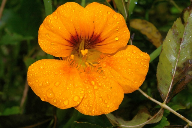 dernières fleurs du jardin Copie_13