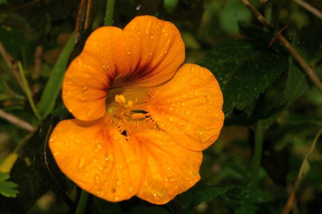 dernières fleurs du jardin Copie_14