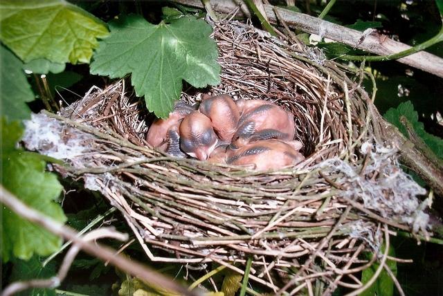 Jolis petits oiseaux... ou grands : 2ème partie - Page 2 Fauvet10