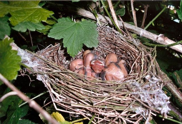 Jolis petits oiseaux... ou grands : 2ème partie - Page 2 Fauvet11
