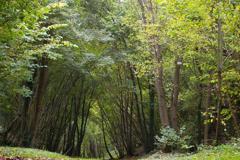 La coulée verte en automne Imgp4116