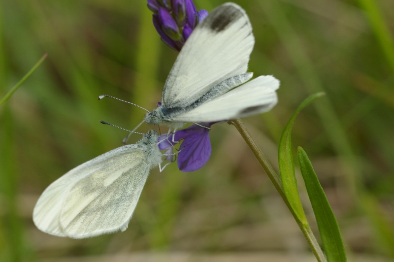 Insectes et papillons Imgp8218