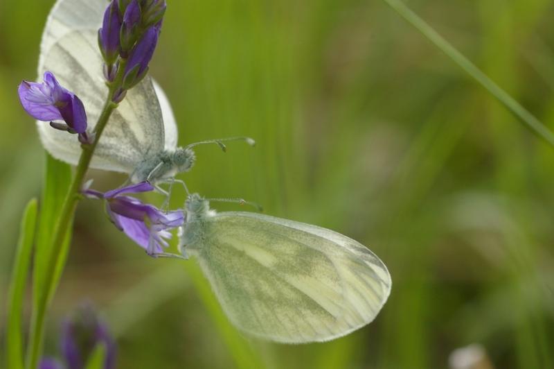 Insectes et papillons Imgp8219