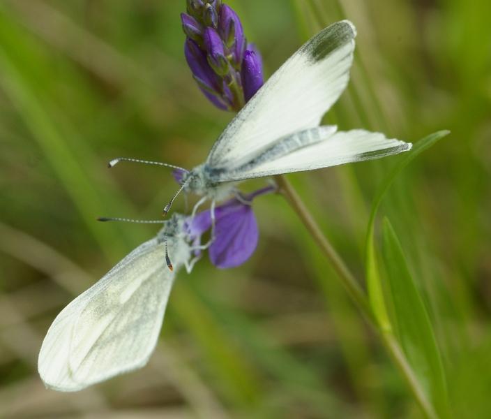 Insectes et papillons Imgp8220