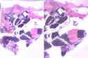 MEUS MELHORES DESENHOS 2012 [BY:TABLET] Lad10