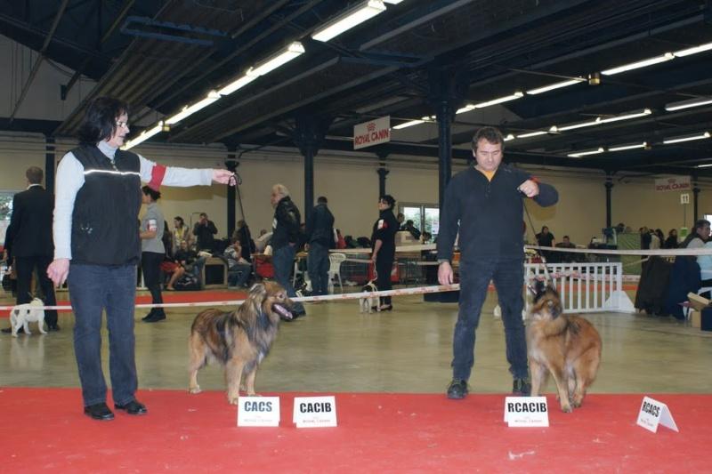 PARIS DOG SHOW 2012 Dsc08510