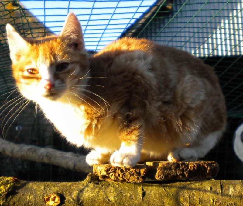 Mfripon, mâle, né en mai 2012 Dscn1611