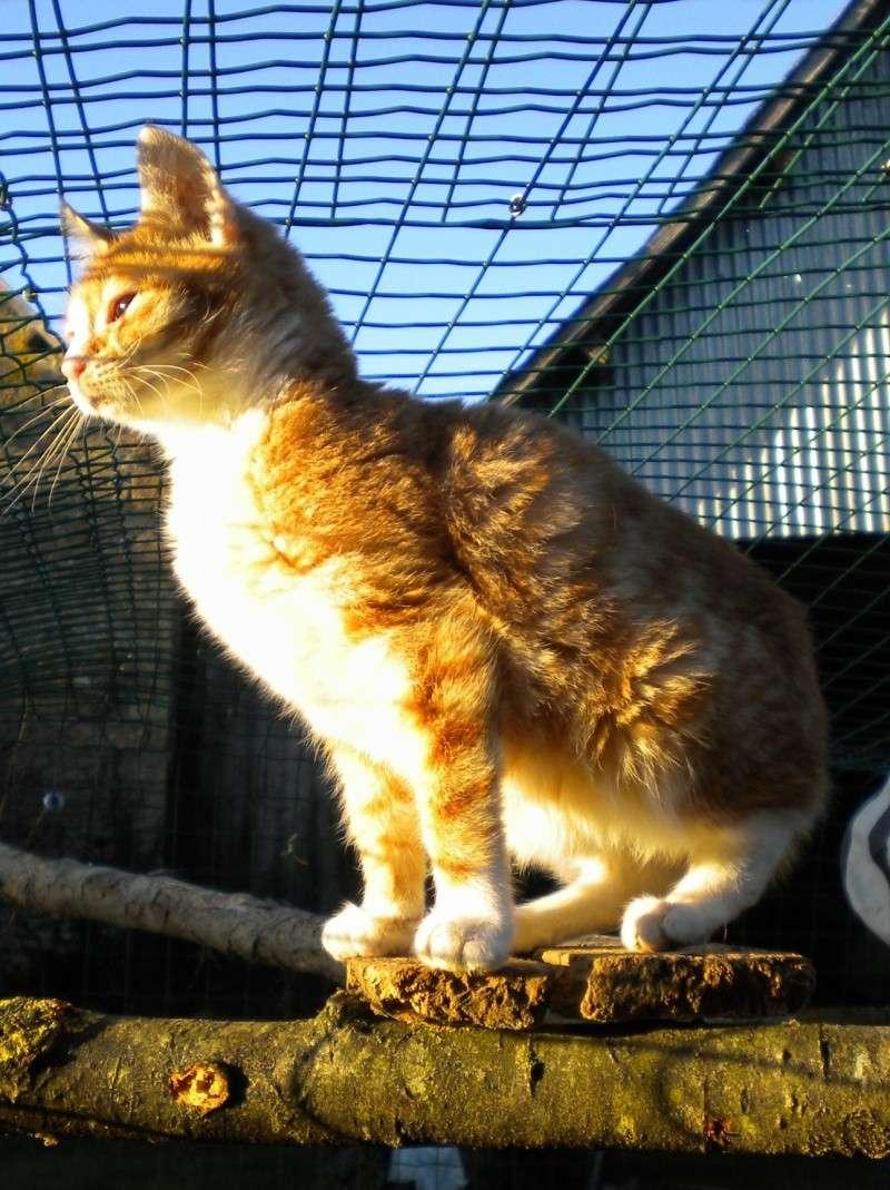 Mfripon, mâle, né en mai 2012 Dscn1612