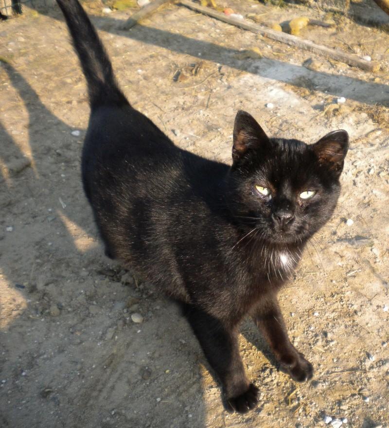 ARTHUR, jeune chat noir né en oct. 2010 Dscn1813