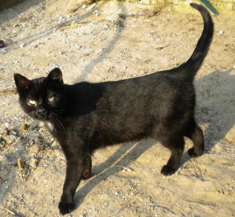 ARTHUR, jeune chat noir né en oct. 2010 Dscn1814