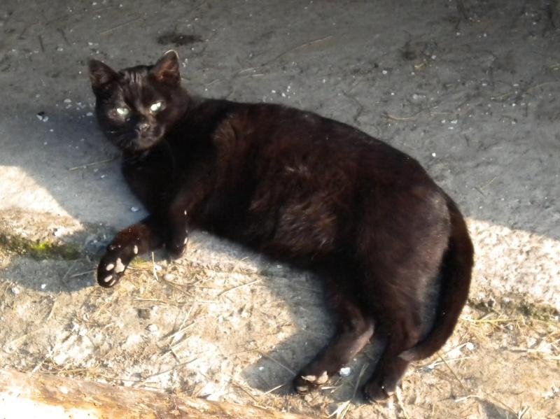 ARTHUR, jeune chat noir né en oct. 2010 Dscn1815