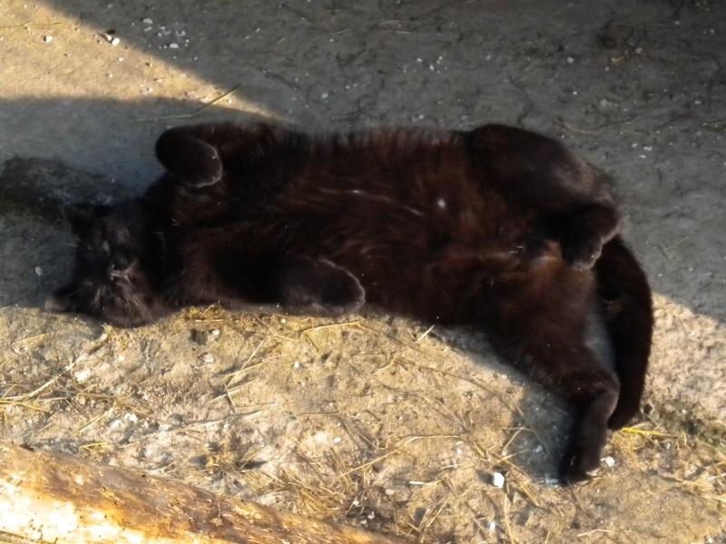 ARTHUR, jeune chat noir né en oct. 2010 Dscn1816