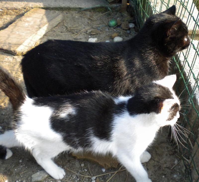 ARTHUR, jeune chat noir né en oct. 2010 Dscn1817