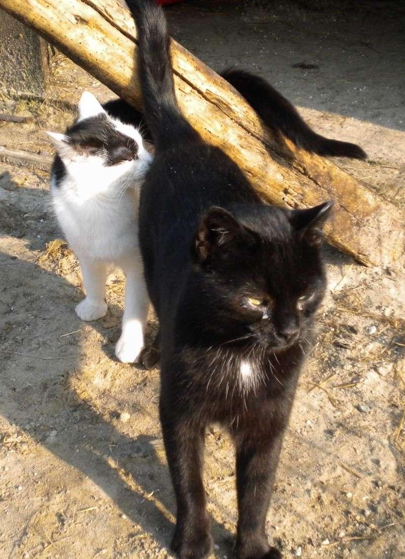 ARTHUR, jeune chat noir né en oct. 2010 Dscn1818