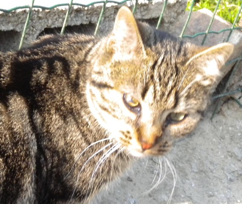 GABY, chatonne tigrée noir et blanche, née en 2011 Dscn1820
