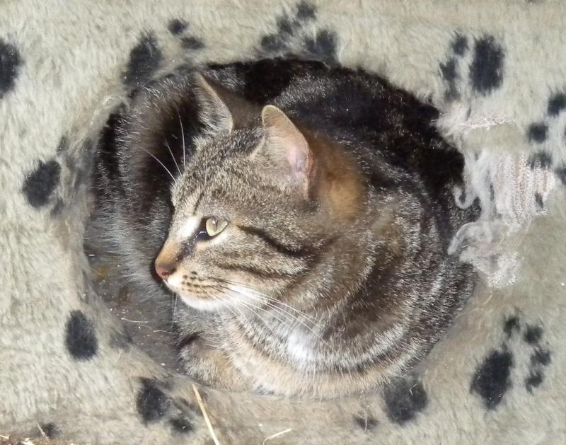 GABY, chatonne tigrée noir et blanche, née en 2011 - Page 2 Gaby110