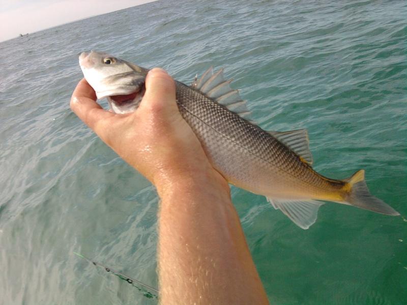 Pas beaucoup de fish !!! mais je reviens avec des photos !!!!!! Photo182