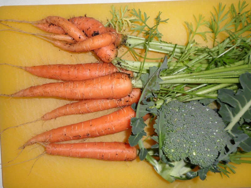 Carrot Week 2012! - Page 14 P7211910