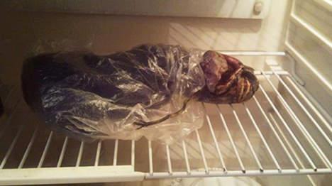 Elle conserve un corps d'alien dans son frigo  Media_17