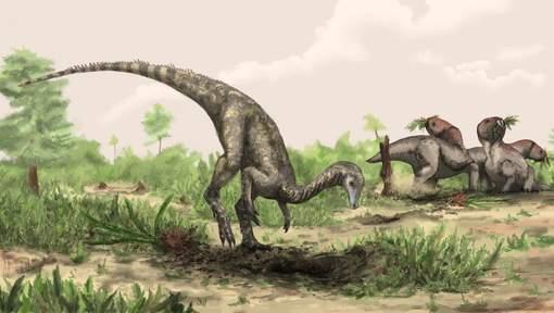 """Le """"plus vieux dinosaure"""" sorti du fond d'un placard  Media_88"""
