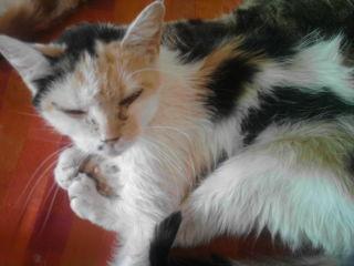 sos pour un chat borgne Chat-l10