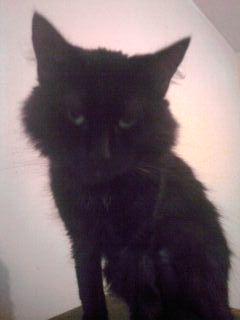 sos pour un chat borgne Chat-n10